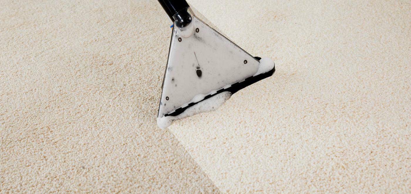 Sunshine Coast Carpet Cleaning Pest